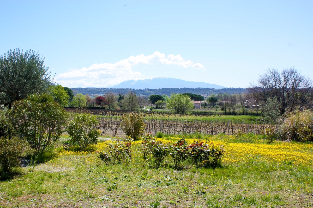 Mont Ventoux - La Françonne